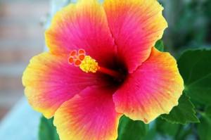 bloom-15753_640