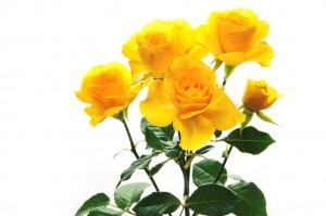 ramo-de-rosas-amarillas-flores-y-arreglos-florales