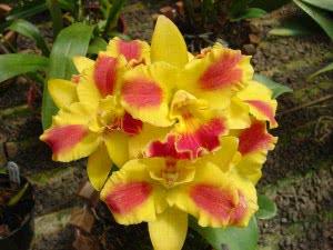 orquideas_20111204_1504127997