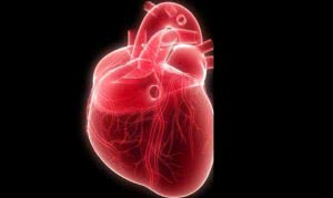 8df_cardiaca