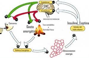 anabolismo-catabolismo