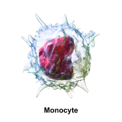 Blausen_0649_Monocyte