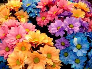 flores_003